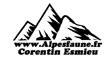 Boutique - Alpes Faune
